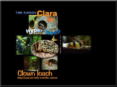 clara-sample.jpg