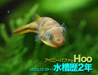 20060101hoo01