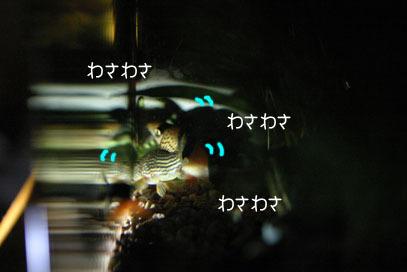 71107sui56