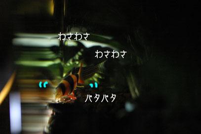 71107sui57