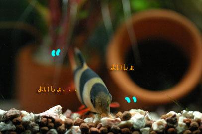 Hori5