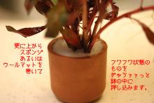 Mizukusa03_3