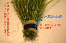 Mizukusa05