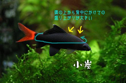60521kosumi_2