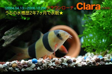2006clara_2
