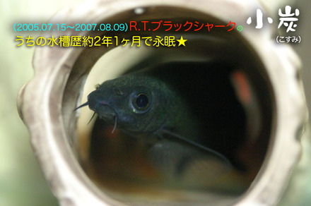 2007kosumi_2