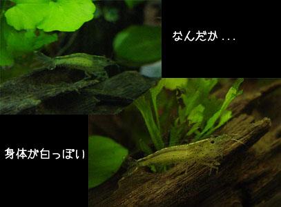 50325yamato01