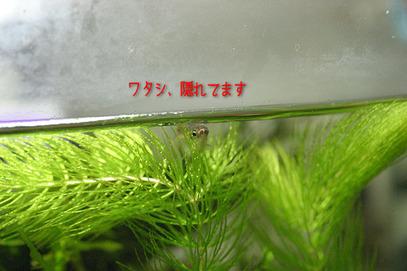 60814atara16_1