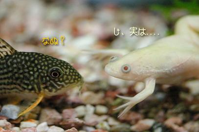 70405sui_1