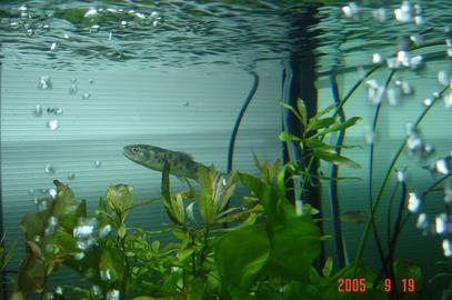 roppongi_aquarium13