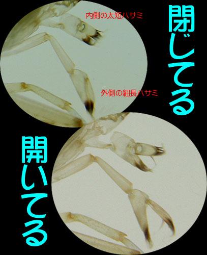 yamatohasami