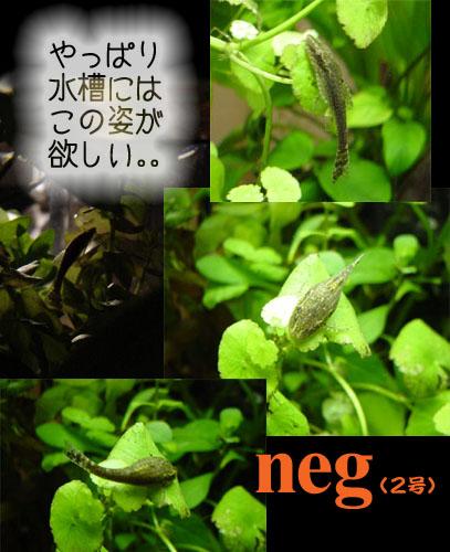 neg2.jpg