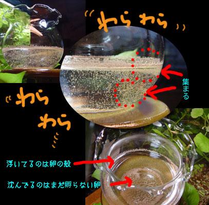 wakuwaku02.jpg