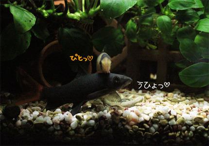 Hanakoeda02_2