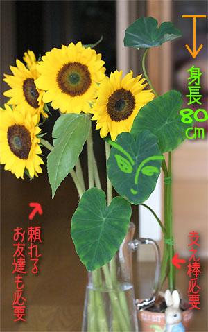 Himawari01_2