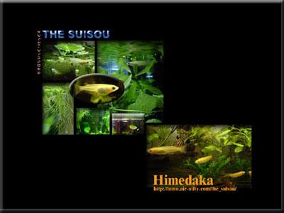 himedaka-sample.jpg