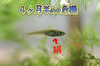 60627kinu_1