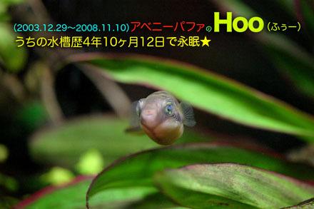 2008hoo_2