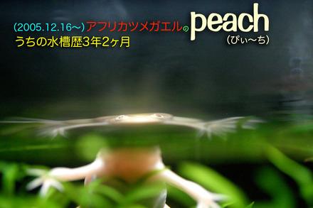 2009peach01
