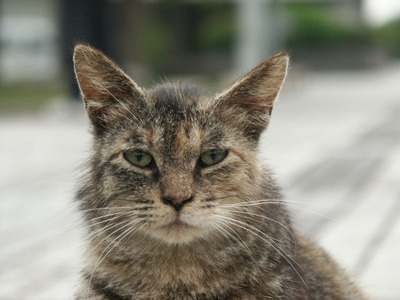 Bosscat_2
