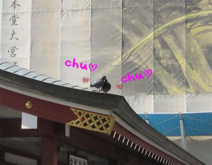 A_hato02